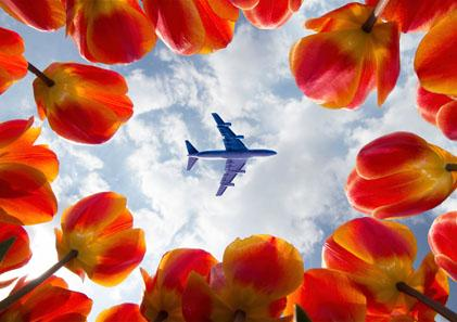 amsterdam-festival-tulipes-aeroport-rennes-billet-avion-vol-direct